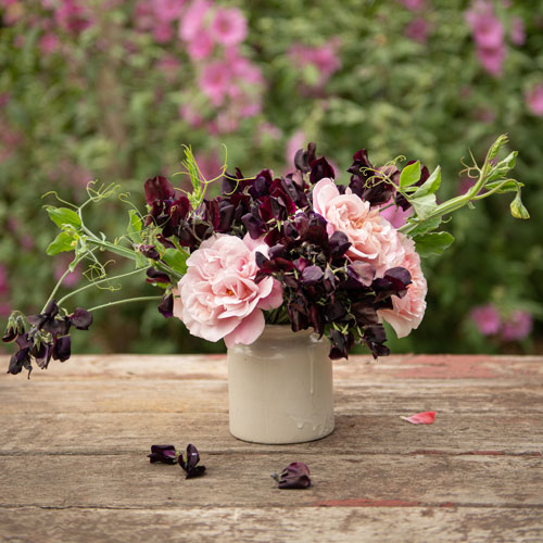 Almost Black Sweet Pea with Pink Roses