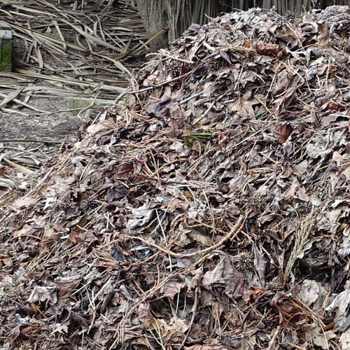 Collect leaves and make leaf mulch