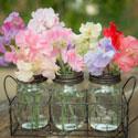 Sweet Pea Vase Life
