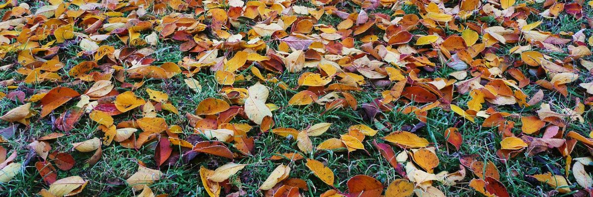 5 Tips for Autumn Gardening Success
