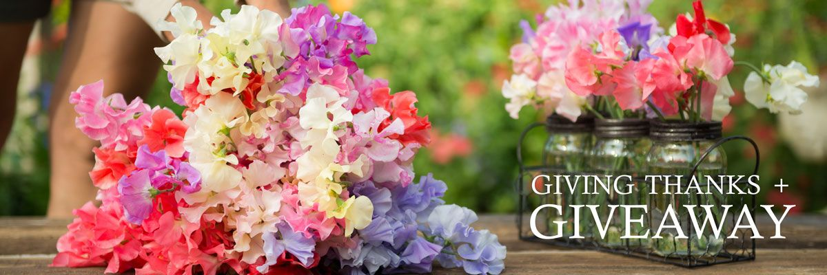 Sweet Pea Seed Giveaway